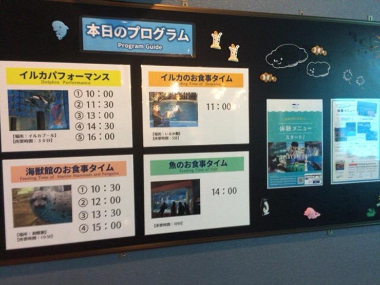 浅虫水族館のイルカパフォーマンスの時間