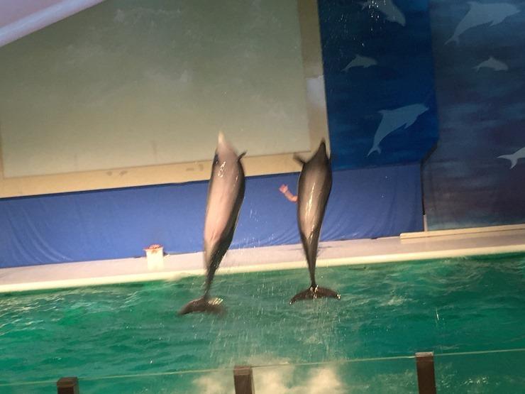 浅虫水族館のイルカのジャンプ