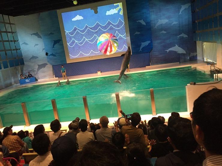 浅虫水族館のイルカが飛ばすボール