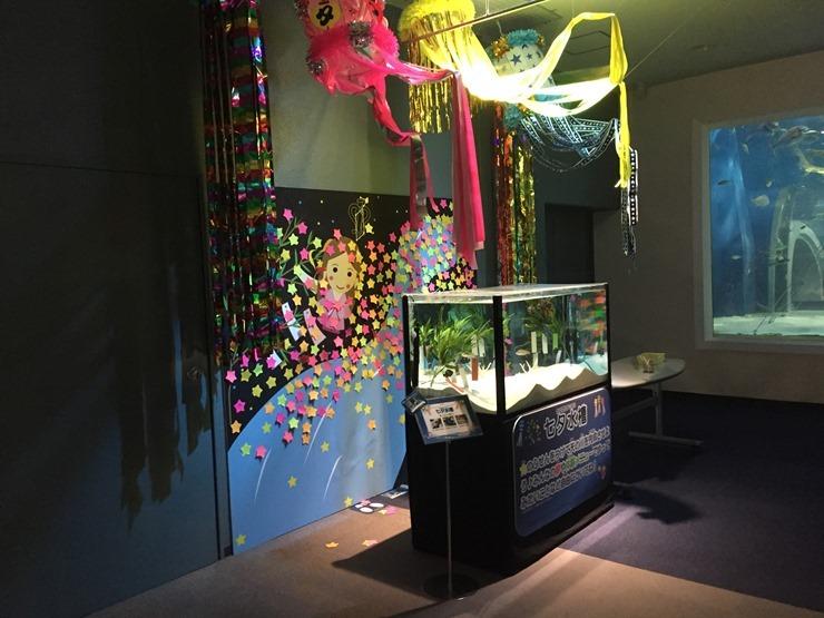 浅虫水族館のイベント水槽
