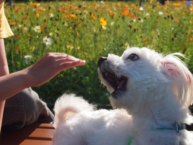 犬の様に吠える男性保育士